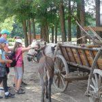 Ecyd tábor a Szellő Lovastanyán