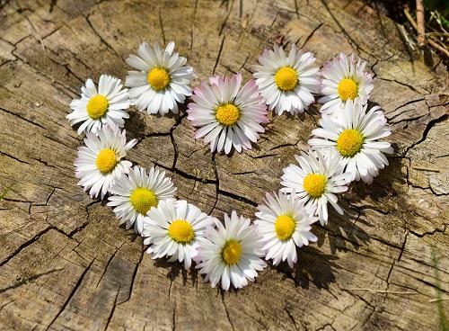 udvariasság, nagylelkűség, erőfeszítés, megbocsátás, hála